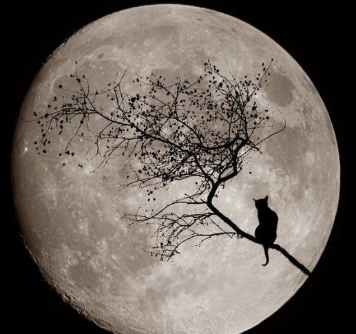 Aydaki Kedi